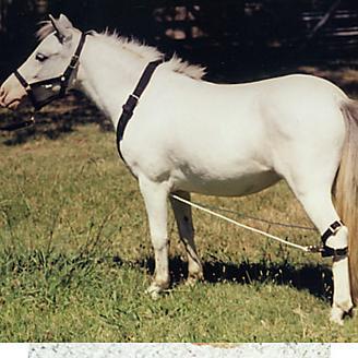 Ozark Mini/Pony Nylon Breeding Hobbles