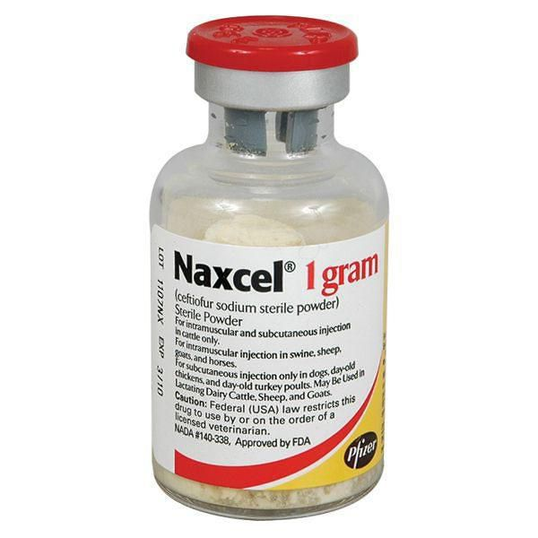 Naxcel Injection 1gm