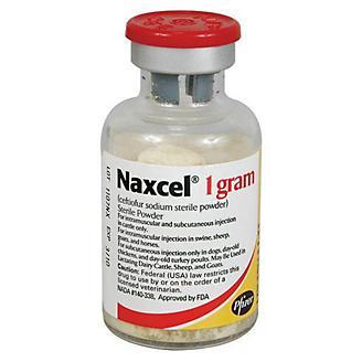 Naxcel Injection