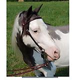 Ozark Western Leather Mini/Pony Bridle