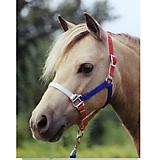 Ozark Mini/Pony Nylon USA Halter 5/8In