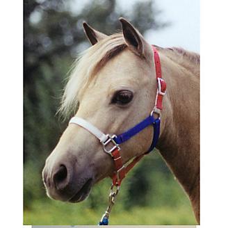 Ozark Mini/Pony Nylon USA Halter 5/8In