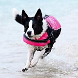 Hurtta Dog Life Jacket