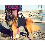 Walkabelly Pet Harness