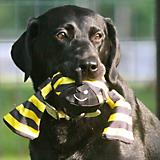 Jolly Tug Bumblebee Dog Toy