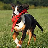 Jolly Tug Lady Bug Dog Toy