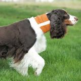 Image Result For Clearance Dog Clothes Coats Cheap Prices Dog Com