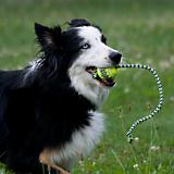 KONG Squeaker Ball with Rope Dog Toy