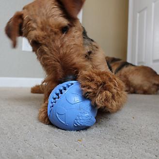 Monster Ball Dog Toy