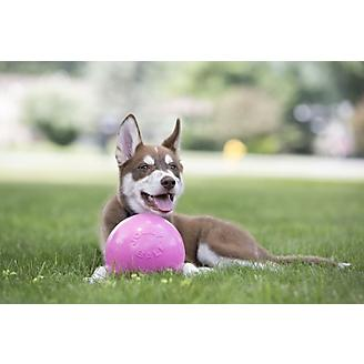Bounce and Play Ball Dog Toy