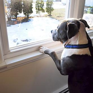 Window Sill Protector