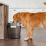Iris Elevated Airtight Storage Dog Feeder
