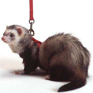 Marshall Ferret Harness And Lead Combo