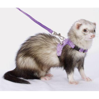 Marshall Walking Jacket for Ferrets