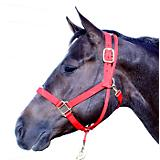 Economy 3-Ply Nylon Poll Control Training Halter