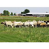 Electric Sheep Netting