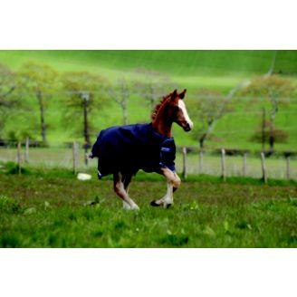 Amigo Foal Turnout Blanket Horse Com