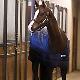 Horseware Blanket Liner 400g 72
