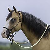 Mustang Bitless Halter Bridle