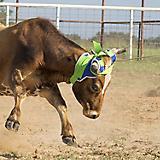 Mustang Stinger Horn Wrap
