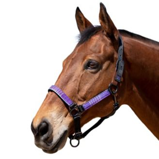 Kensington Premium Breakaway Halter with Padded Nose /— Added Breakaway Safety Measures /— Snap at Throat for Identical Fit Each Time