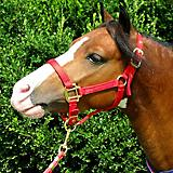 Weavers Tack Premium Nylon Halter Mini Yearling Hu