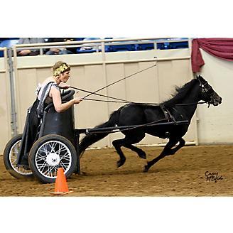 Ozark Kildow Mini/Pony Breaking Driving Harness