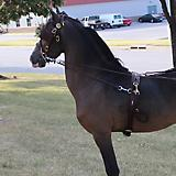 Ozark Kildow Driving Headstall With Blinders Mini