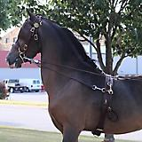 Millers Harness Training Headstall