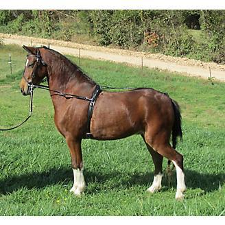 Ozark Mini/Pony Training Surcingle