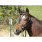 Millers Harness Open Headstall Pony