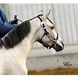 Ozark Premium Silver Perform Mini/Pony Halter