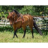 Ozark Min/Pony Western Show Harness Mini Brown