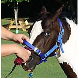 Harness and/or Grooming Halter
