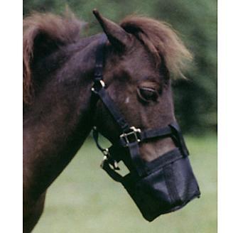 Ozark Miniature Horse Halter Square Muzzle