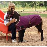 Kensington Waterproof Mini Foal Blanket