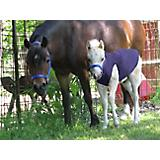 Ozark Mini Polarfleece Foal Jacket