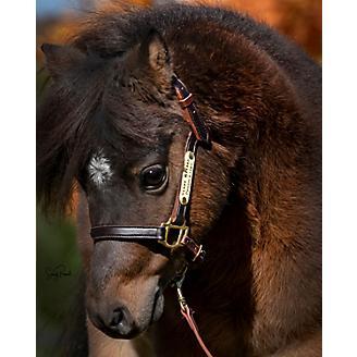 Ozark Mini/Pony Personalized Leather Halter