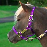 Ozark Mini/Pony Personalized Nylon Halter