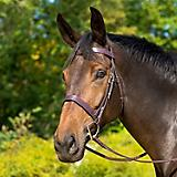 Shires Avignon Middleburg Bridle