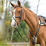 Shires Avignon Five Point Breastplate