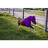 Ozark Mini/Pony Lycra Hood w/Zipper