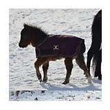 Foal Blanket and Halter Set