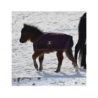 Foal Blanket and Halter Set