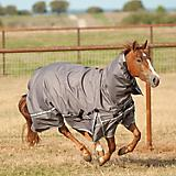 Classic Equine X Trainer 5K Blanket with Hood
