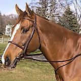 Legacy Plain Raised Snaffle Bridle