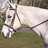 Pro-Trainer Padded Fancy Stitched Bridle