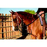 Al Dunning by Pro Choice Draw Rope Martingale