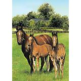 Horse Family Large 28x40 Flag