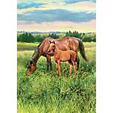 Horse Pasture Large 28x40 Flag
